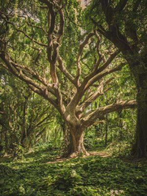 FOREST CLIMB A TREE pexels-veeterzy-38136